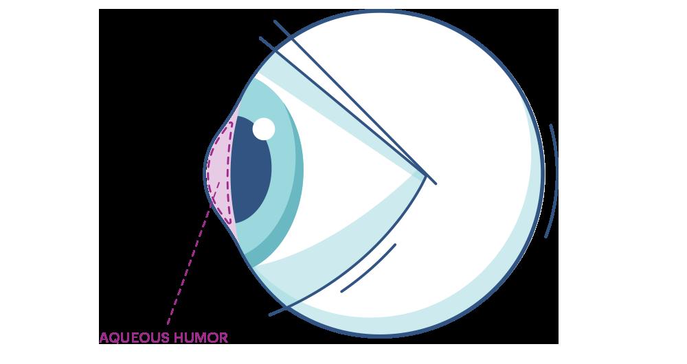Aqueous Humor Diagram