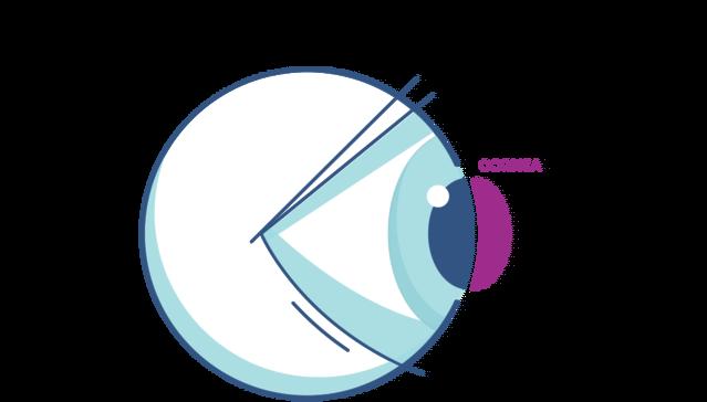 Cornea Diagram